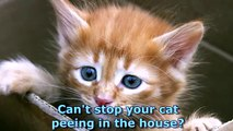 Cat Spraying No More - How To Stop Cat Spraying