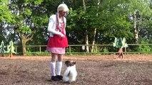 """Clickertraining/Tricks mit Tieren Vorführungen kl. Tiere 1. Teil """"Die Reise zur weissen Taube"""" 2015"""