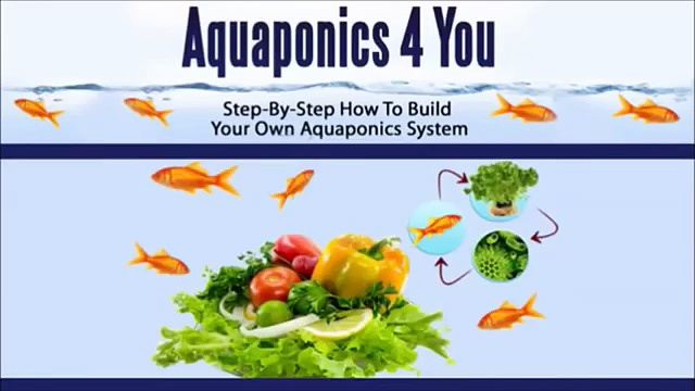 Aquaponics 4 You Review | Is Aquaponics 4 You As Good As It Sounds?