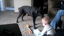 Un bébé plié de rire face à un chien très joueur.
