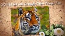 apple cider vinegar for dogs   apple cider vinegar benefits   best natural diuretics weight loss