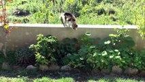 Un chat joue avec une souris!