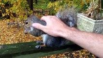 Écureuils, porc-épic et autres rongeurs hilarants... Compilation d'animaux marrants