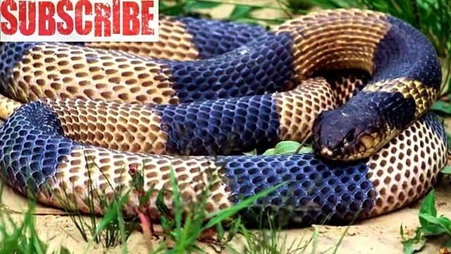 Facts About Snakes / #Interesting #Facts/ Did You Know ? (Funny Videos 720p)