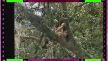Funny happening sexy ladies videos【海外ハプニング】おバカな美女たちの襲撃おもしろハプニング映像集! (FULL HD)