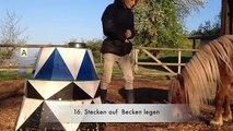 """Clickertraining/Tricks mit Pferden Lektion """"Hut auf den Kopf legen"""""""