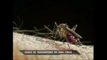 EUA confirmam primeiro caso de zika vírus transmitido por relação sexual