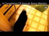 Des animaux de compagnie très bizarres et un peu fou - Compilation de chiens et chats