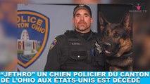 Jethro, un chien policier du canton de l'Ohio aux États-Unis est décédé... Plus d'infos dans la minute chien #120