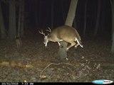 before 1 deer action in dance & 3 deer action in dance - nice dance-