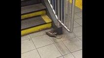 Крыса тащит крысу метро New York City Rat dragging rat subway