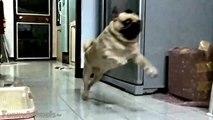 Ultimate Animal Fails Compilation 2016 feb _ Funny animal fail - Funny pets fails - most hilarious fail video