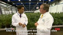 Le cannabis efficace contre la maladie d'Alzheimer (extrait de Weed 3) (STFR)
