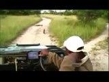Elephants - Latest Wildlife Sightings Kruger Sightings - Naughty Hyenas