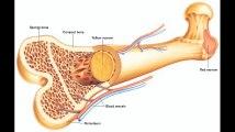 human body bones for all students || Body Scaleton Bones || Head Bones