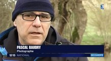 Pascal Baudry : le photographe immortalise le marais poitevin en hiver