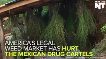 Mexican Drug Cartels Are Hurting Due To United States Legal Weed Sales