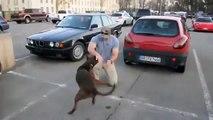 Собака встречает хозяина после армии!