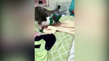 Here Comes Santa Claws! Woman Dresses up Her Cat for Christmas