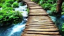 15 Minute Deep Meditation Music: Nature Sounds, Relaxing Music, Soothing Music, Calming Music ✿010C