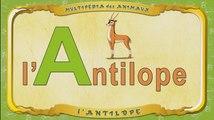 Multipédia des animaux. La lettre A - l'Antilope