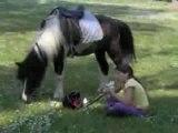 Tranches de Vie ! A cheval !