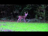 Whitetail Fix Presented by Bear Archery - Whitetail Fix Presented by Bear Archery