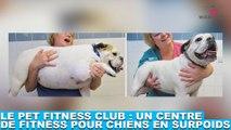 Le Pet Fitness Club : Un centre de fitness pour chiens en surpoids ! Découvrez-le dans la minute chien #125