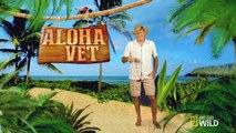 Dr. Scott Sims - The Aloha Vet - NatGeo WILD