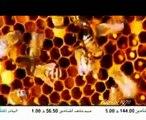 Homeyra-Kordestan (Persian ft  Kurdish Music 2010)
