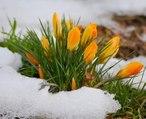 Весна! Красивая мелодия для души!