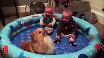 Adorable twin babies are crying with laughter over funny Pomeranian
