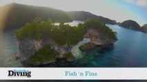 World's Best Diving: Fish 'n Fins/Ocean Hunter I & III