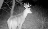 Rut Report: All Quiet on the Great Plains