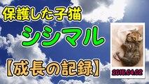 【第62話】家事をひたすら邪魔する子猫(面白い&可愛い子猫)