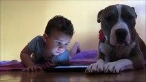 iPad ile Oynamaya Çalışan Küçük Arkadaşının İlgisini Çekmeye Çalışan Sevimli Köpek