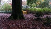 Autumn in the Hague Park Holland