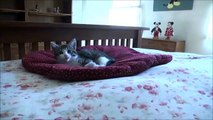 Cute kitten explores life at five weeks - Relaxing music video