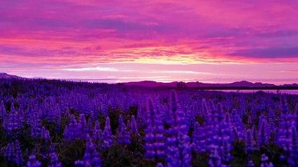 Midnight Sun | Iceland