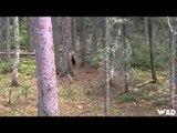 Hunting Canada and Beyond - Saskatchewan Bear