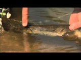 Canadian Sportfishing - Fishing for Snakehead in India