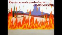 Coyote and Roadrunner Top Speed - Most Wanted Cartoon