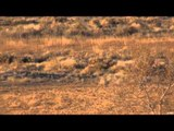 Long Range Pursuit - Weibe Wails a Wyoming Deer at 580 Yards