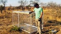 "Lions Documentary - Lions Vs Man׃ ""Man in a box vs Lions"" - Lions Documentary WILD 2015"