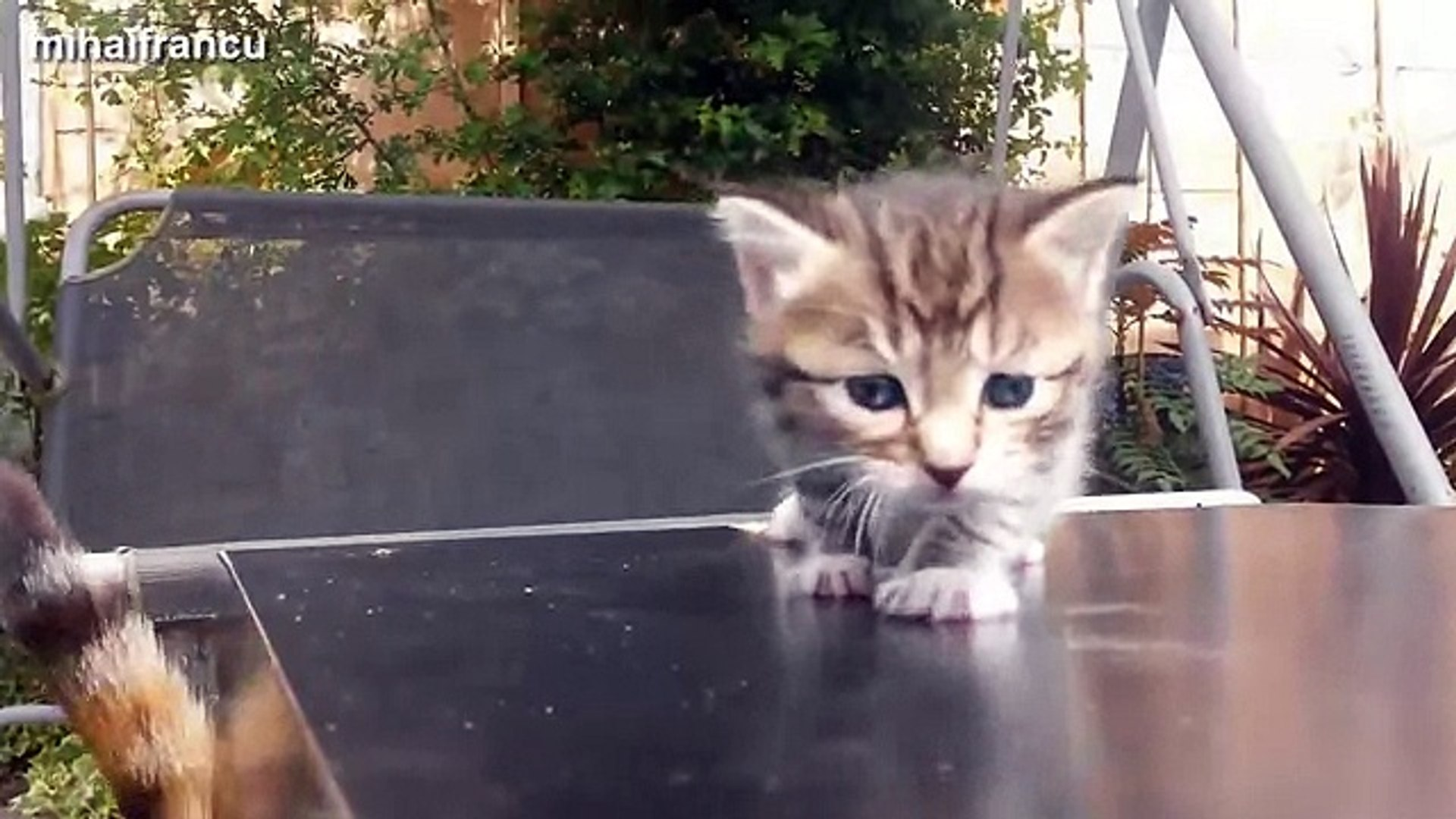 Funny Cat baby - funny cat - funny cat movie - funny cat food - fun with cat - fun with funny -