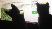 Les chat et la souris sa fait deux !