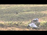 Into High Country - Alaska's Barren Ground Caribou