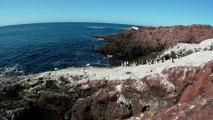 Les pinguins de l'ile des pinguins à Puerto Deseado au Chili