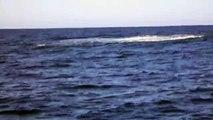 Une baleine à bosse filmé dans le bassin d'Arcachon