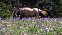 Elle repère un cheval à flanc de montagne. Alors qu'elle filme le paysage, elle parvient à immortaliser quelque chose d'INCROYABLE sur pellicule.